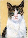 El Gato I