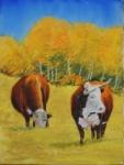 Elk Meadows Series 49X12