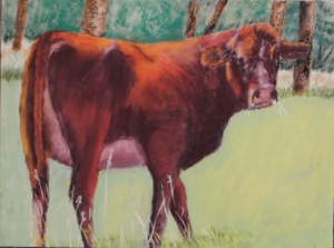 Elk Meadows Cow 2