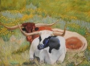 Orvis Longhorns