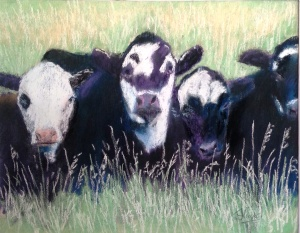 Ouray County Calves #3 8x12 $225.00