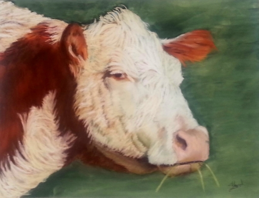 Ouray County Hereford #9 11x14 $350