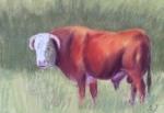 Potter Bull 2015 9x12 $250