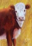 Potter calf 2015 $125