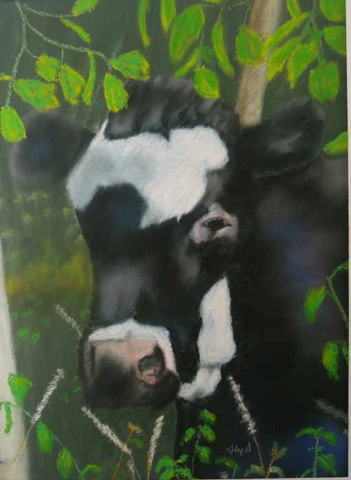 12x16-blackcow1
