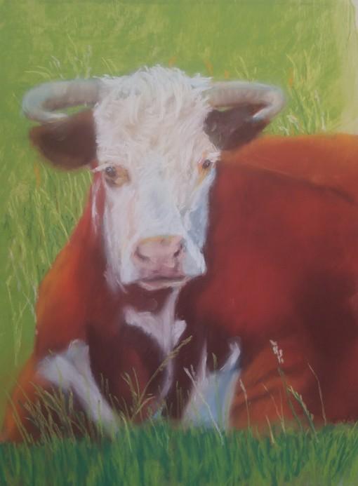 9x12-cow-44